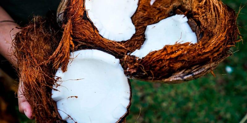 coco santeria